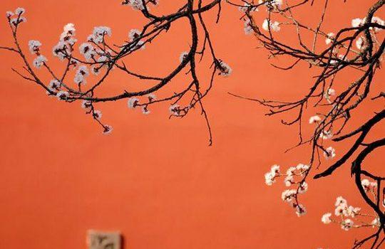 Orientalne wnętrza w nowoczesnym wydaniu – na co warto postawić?