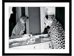 Fotografia Cheetah in the Mirror 80x60cm