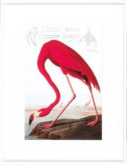 Grafika American Flamingo Pink 70x90cm