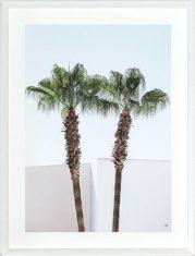 Fotografia Palms Clear Sky 3 65x85cm
