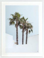 Fotografia Palms Clear Sky 2 65x85cm