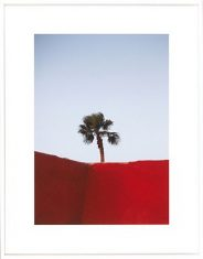 Fotografia Moroccan Red Wall Palm 75x95cm