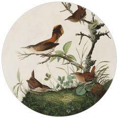 Przycisk do papieru Audubon 8×3,5cm