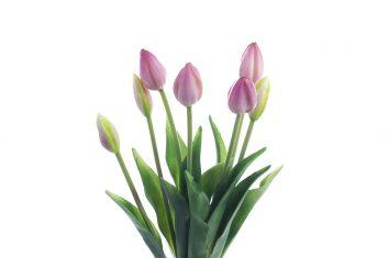 Tulipany Tulip Bunch Pink BBHome bukiet 7szt.